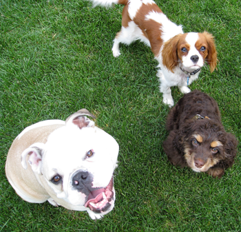 Selecting the Right Dog for you and your family