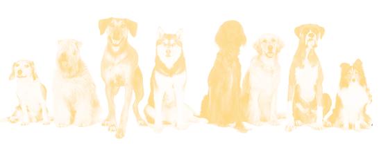 DogGoneGoodTraining-lauren-whittemore