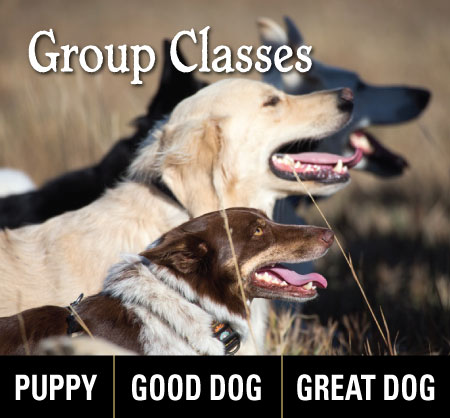 Group-Classes-with Dog Gone Good Training