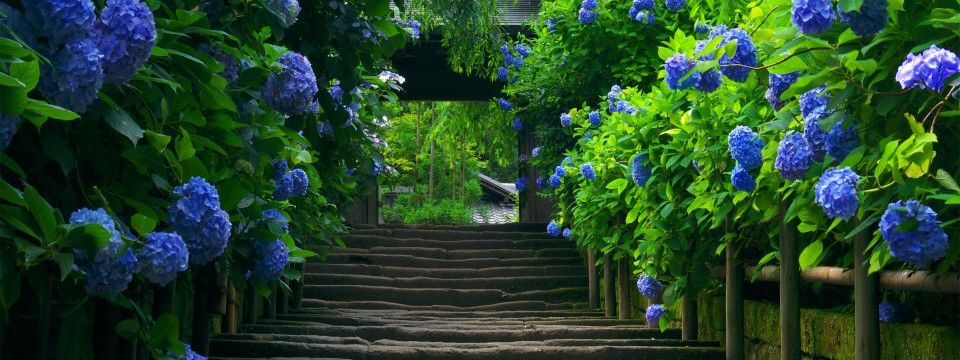 Nature Green Road Wallpaper Japan Hd Desktop Wallpapers L A 960x360
