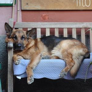 Philosophy Dog Training with Lauren Whittemore, dog gone good training
