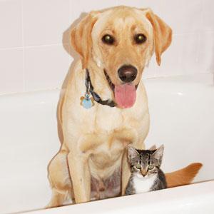 Bathtime-Cat-Dog